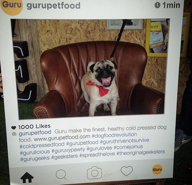 Who's got 4 paws and a better social media following than you?